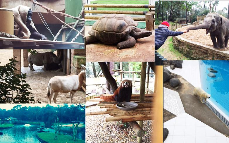 Zoo de la Palmyre en famille