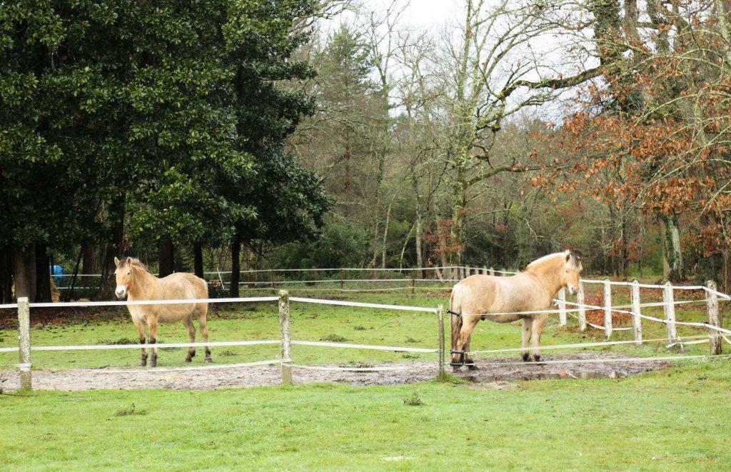chevaux-chateau-leognan
