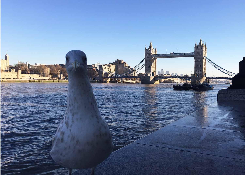 Que faire à Londres pendant 3 jours ?