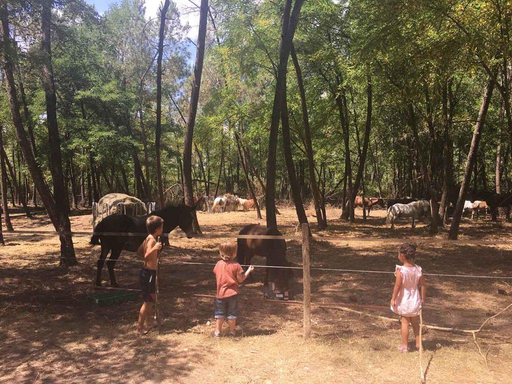 base-de-loisirs-des-lacs-du-moulin-blanc-animaux