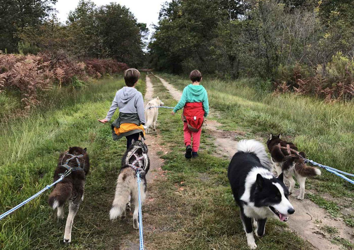 Balade insolite en chien de traineaux en Gironde