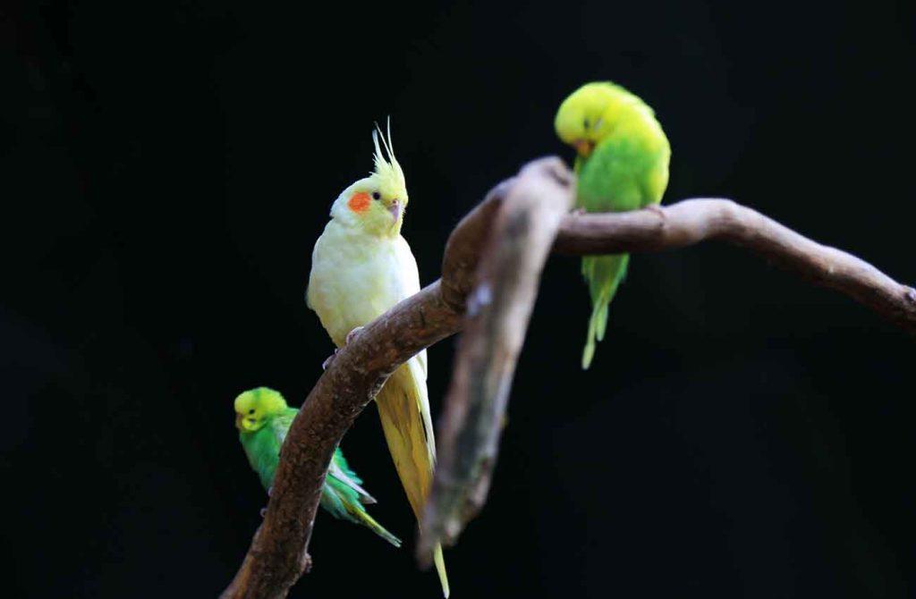 oiseaux-chateau-milandes