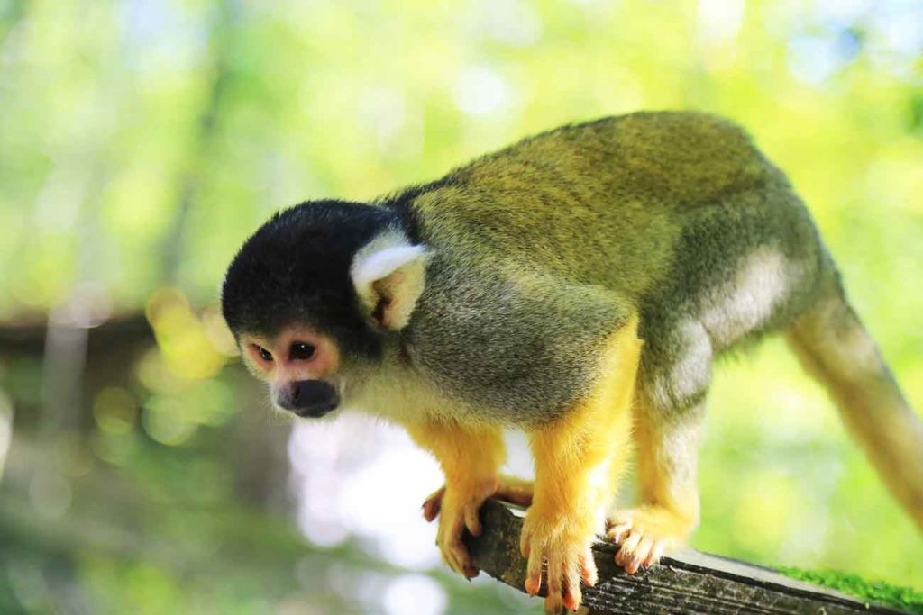 ouistiti-reserve-zoologique-