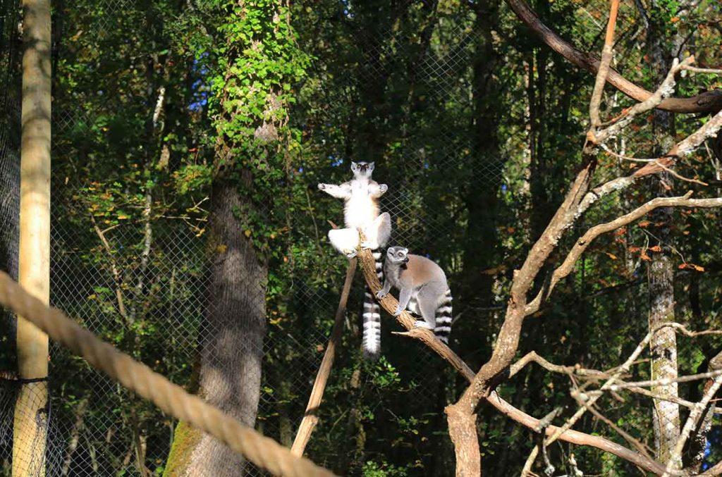 reserve-zoologique-perigord-noir